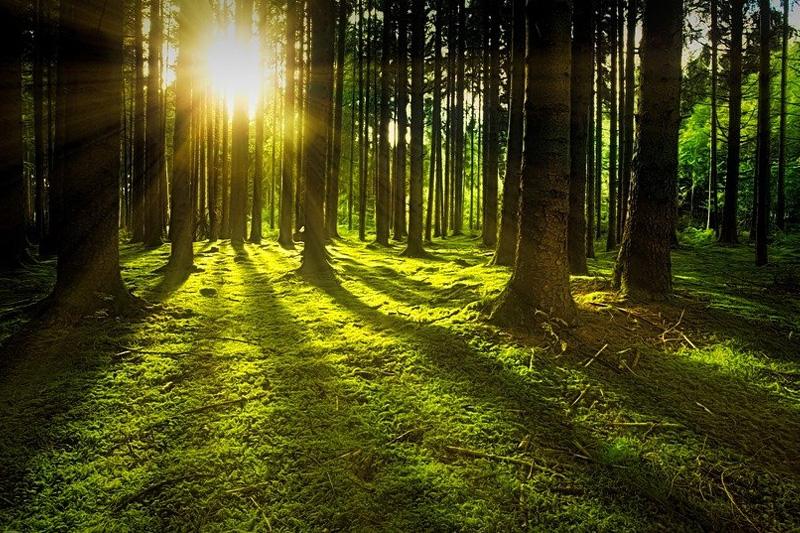 PB - leśnictwo