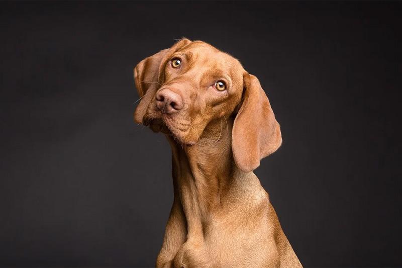 Zoopsychologia: problemy behawioru psów – studia podyplomowe w SGGW